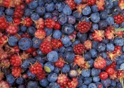 frutas del bosque